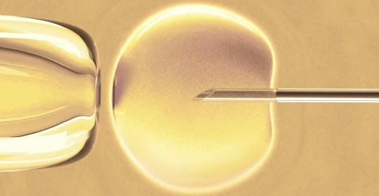 La microinjecció intracitoplasmàtica d'espermatozous (ICSI)